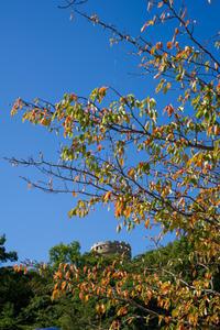 松山総合公園秋風景① - かたくち鰯の写真日記2