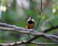 鳥枯れ、、でもヤマガラが、、 - ぶらり探鳥
