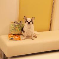 ベテランさん - 宮城県富谷市明石台  くさか動物病院ブログ