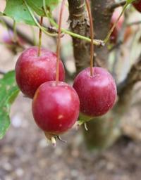 ハロウィン仕様のビオラ寄せ植え - HOME SWEET HOME ペコリの庭 *