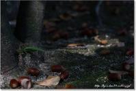 秋の気配 - 石屋の女房