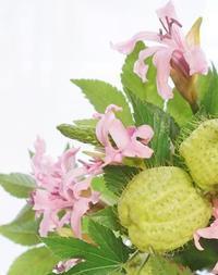 ハーフ引当率100%のひと(^^♪ - お花に囲まれて