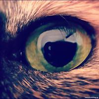 雑記 - 賃貸ネコ暮らし|賃貸住宅でネコを室内飼いする工夫