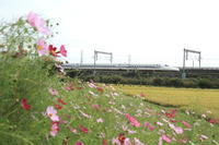 沿線で秋、見ぃ~つけた。① - 新幹線の写真