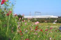 沿線で秋、見ぃ~つけた。③ - 新幹線の写真
