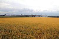 その者紫の衣をまといて金色の野に降り立つべし② - 新幹線の写真