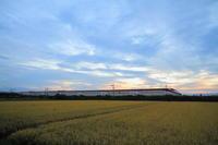 その者紫の衣をまといて金色の野に降り立つべし④ - 新幹線の写真