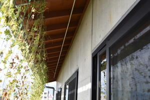枯露柿を吊るすパイプ - 甲府の野菜畑