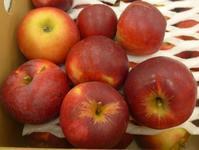 11月イベント出店販売のお知らせ、紅玉りんご入荷しました - つばさ工房ジャム日記