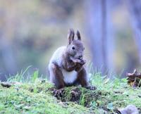 旭川市の神楽岡公園を散歩エゾリス - フクちゃんのフライ日記