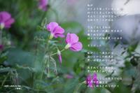 帰郷 - 陽だまりの詩
