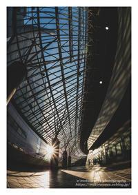 輝く光浴びて - ♉ mototaurus photography