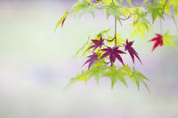 utsuroi - jinsnap_2(weblog on a snap shot)