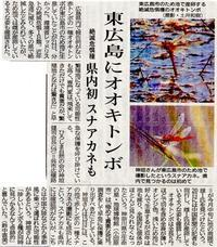 東広島にオオキトンボ - Mag's DiaryⅢ