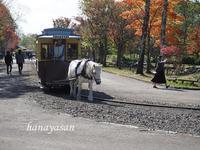 北海道開拓の村 - こもれびの森