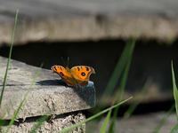 秋を知る - M2_pictlog