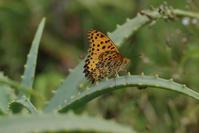 「東京から一番近い南国」へ - 蝶と蜻蛉の撮影日記