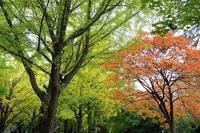 北海道大学の構内で秋を探してきました。 - ワイン好きの料理おたく 雑記帳