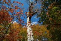 小谷村鎌池の紅葉その1 - 日本あちこち撮り歩記