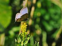 蝶を呼ぶ秋の黄色い花 - 不思議の森の迷い人