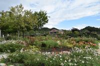 花フェスタ記念公園にて「講演&ローズガーデンツアーガイド」をさせて頂きました。 - 元木はるみのバラとハーブのある暮らし・Salon de Roses