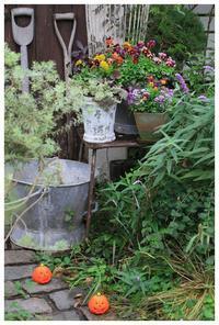 ビオラの寄せ植え、寄せ集め~♪ - natu     * 素敵なナチュラルガーデンから~*     福岡で庭造り、外構工事(エクステリア)をしてます