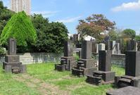 大橋巻子のお墓(1)(江戸のヒロインの墓㉕) - 気ままに江戸♪  散歩・味・読書の記録