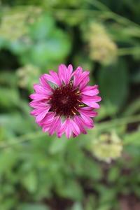 我が家の宿根草の耐寒性指標 - HOME SWEET HOME ペコリの庭 *
