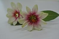 秋のお花を押し花に - アトリエ・アキ