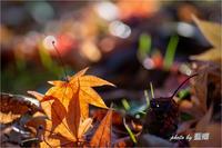 落ち葉 - 藍の郷