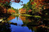 紅桜公園 - お茶にしませんか2