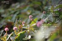 地平 - Poetry Garden 詩庭