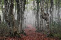 濃霧のブナ林にて - Qualia