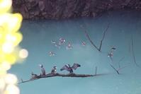 オシドリ行 - 野山の住認たちⅡ
