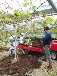 熊本ぶどう社方園お礼肥えと果樹の若返り今年も鹿本農業高校から実習生が来ました(2018)!!後編 - FLCパートナーズストア