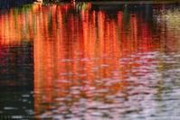 赤い水辺 - T O K I B A K O