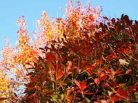 秋晴れにぴったり - 標高1,100メートルの悦楽