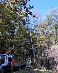 庭木の整理 - 北軽1130