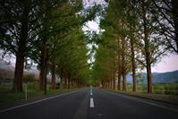 静かな湖北で - 京都ときどき沖縄ところにより気まぐれ