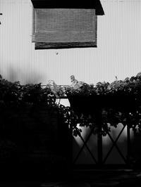 トタンの壁 - 節操のない写真館