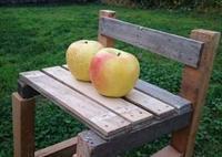 シナノスイートは、お届け完了いたしました。→次のリンゴは「ぐんま名月」です - 百笑通信 ブログ版