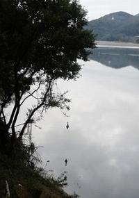 千鳥橋の川下にて - blog版 がおろ亭