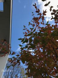 紅葉…そして落ち葉の季節 - Bleu Belle Fleur☆ブルーベルフルール