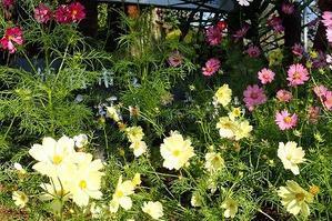 秋のクイズに、みんなで挑戦! - 手柄山温室植物園ブログ 『山の上から花だより』