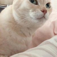 あまえるポンコをキューが見ている - 賃貸ネコ暮らし|賃貸住宅でネコを室内飼いする工夫