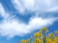 泡立草の空と雲 - いつかみたソラ