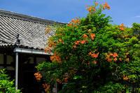 ノウゼンカズラ咲く(恵心院) - 花景色-K.W.C. PhotoBlog