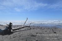 秋の海の一日 - すずめtoめばるtoナマケモノ