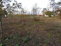 立木の伐採・・その1小木の伐採・掘り起こし。 - あいやばばライフ