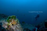 ダイバー見物 - Diving Life ~Aita pe'a pe'a~